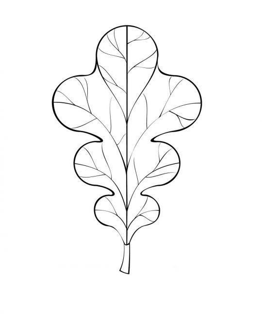 liście do druku: liść dębu