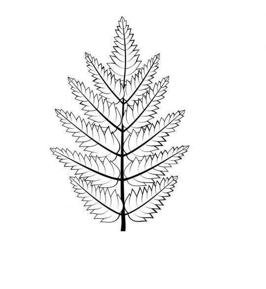 liście do druku: liść jarzębiny