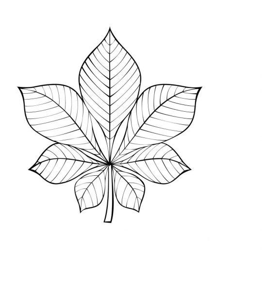 liście do druku: kasztan