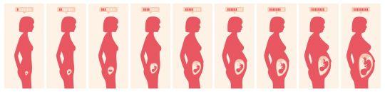 macica w ciąży jak rozciąga się macica