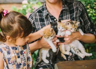 mała dziewczynka dotyka kotków, które dorosły trzyma na rękach