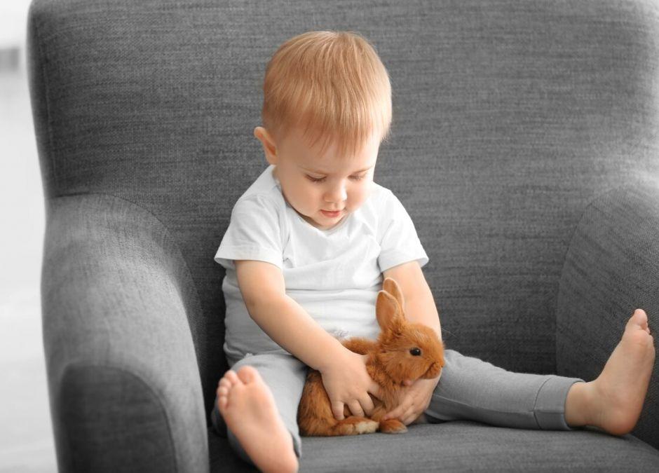 małe zwierzęta domowe