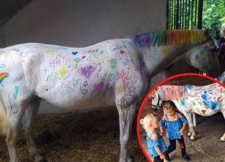 malowanie koni