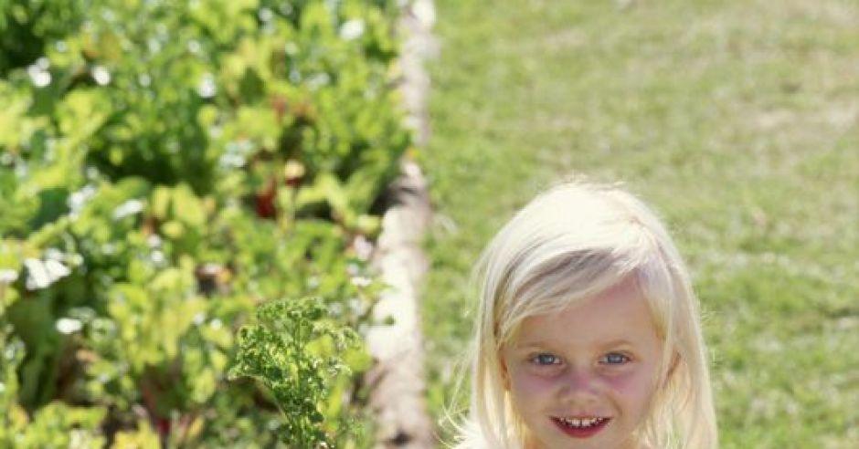 maluch, ogródek, lato