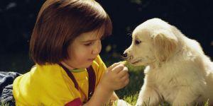 maluch, pies, zwierzę, trawa