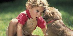 maluch, pies, zwierzęta, spacer, zabawa