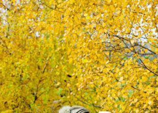 mama, dziecko, jesień, spacer