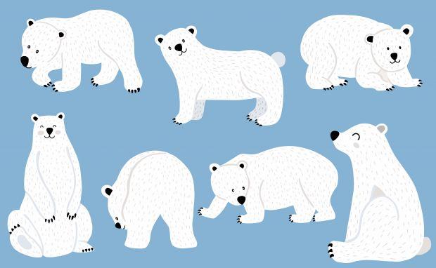 jak narysować niedźwiedzia polarnego