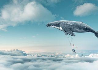 niebieskie-wieloryb-gra-samobojcza-dla-dzieci