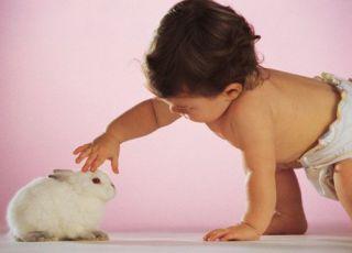 niemowlę, królik, zwierzę