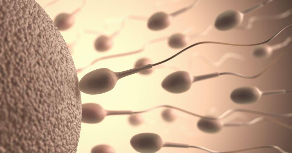 oligospermia przyczyną męskiej niepłodności, mała ilość plemników