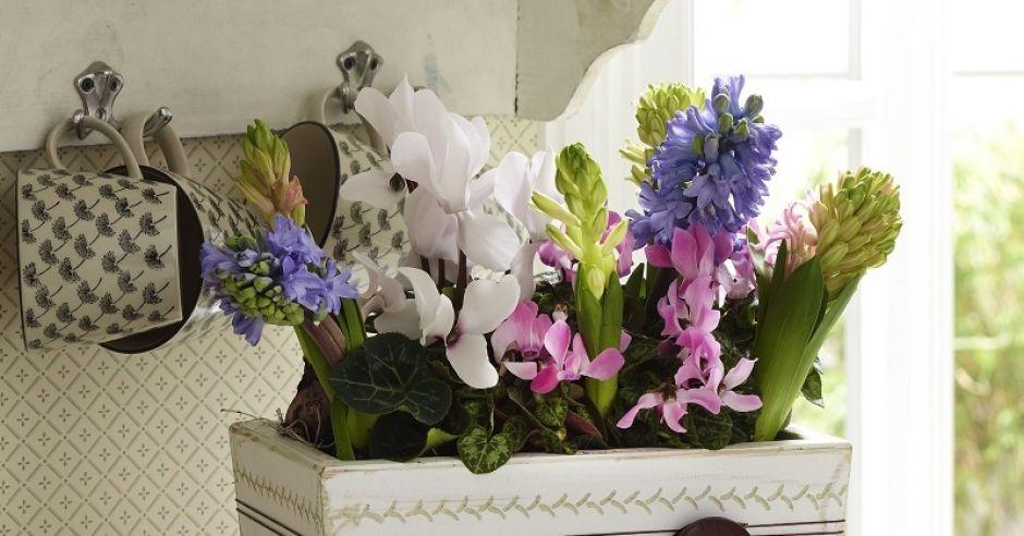 Ozdobna doniczka na kwiaty - aranżacja
