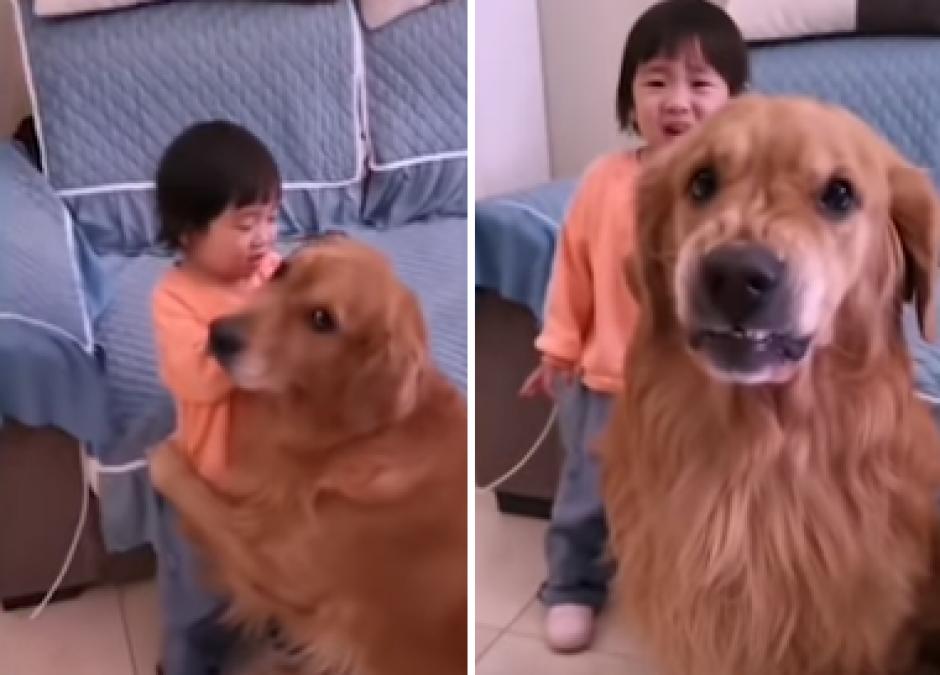 Pies broni dziecka