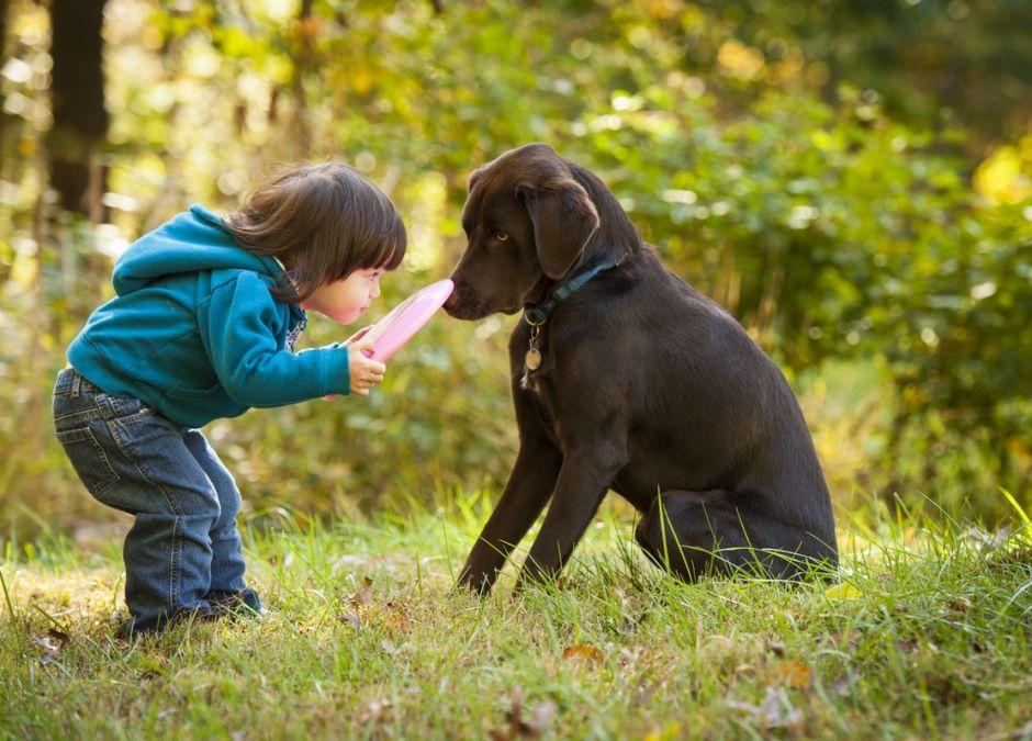 pies może ugryźc dziecko