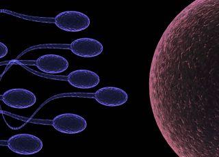 plemniki, komórka jajowa, zapłodnienie, niepłodność