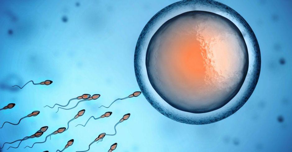 plemniki, sperma, nasienie, zapłodnienie, płodność