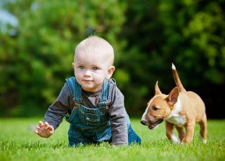 pogryzienie, przez, psa, pierwsza, pomoc, dziecko