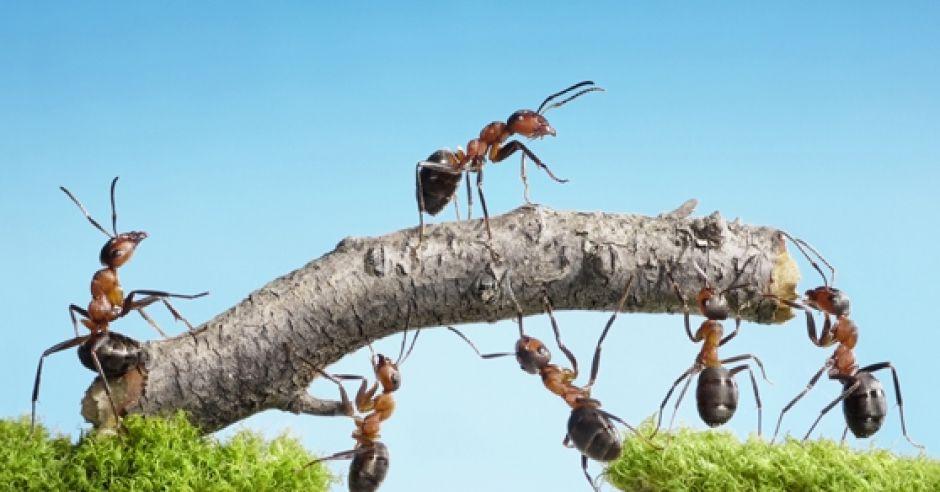 pokąsanie, mrowki, pierwsza, pomoc, dziecko