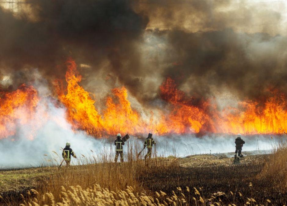 Pożary lasów wokół Czarnobyla. Czy ich skutki mogą zagrażać Polsce?