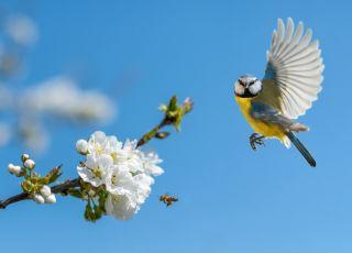 ptaki wiosenne