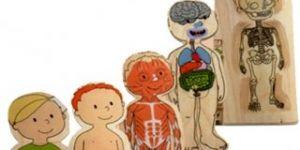 puzzle, ciało, chłopiec, zabawka