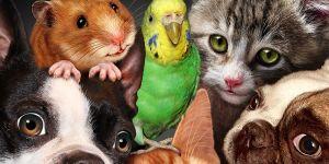 quiz o zwierzętach