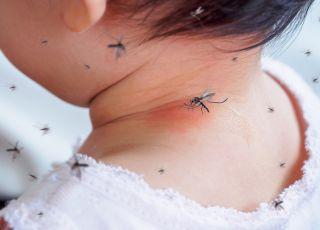 raid na komary