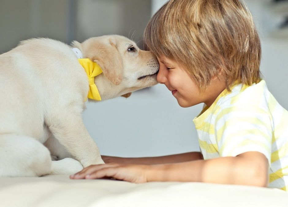rasy psów dla dziecka