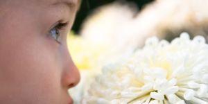 rośliny-oczyszczają-powietrze