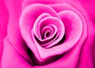 róża, labioplastyka, plastyka intymna, wargi sromowe, srom, operacja warg sromowych