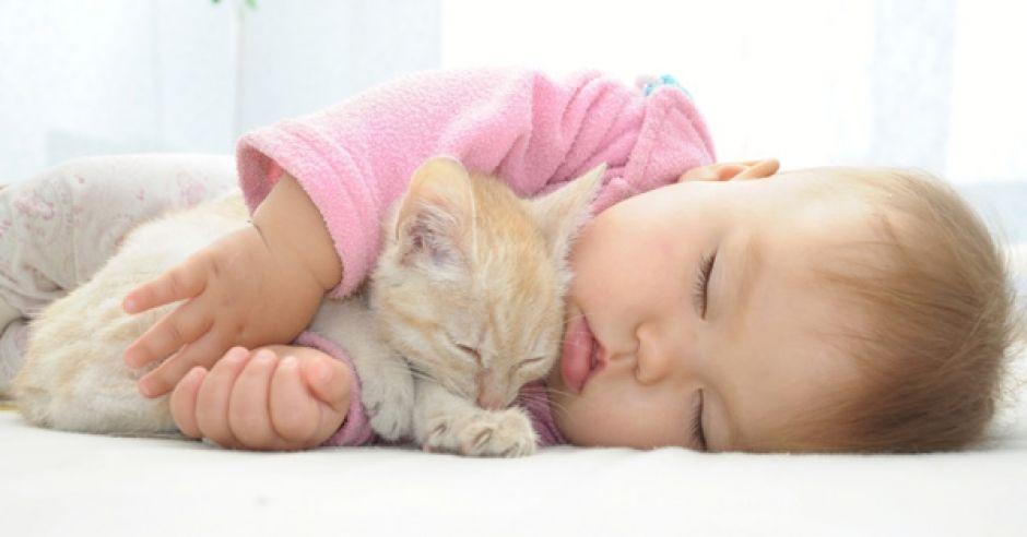 Rudy kot i niemowlak
