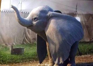 słonik Dumbo - nowa wersja aktorska Disneya