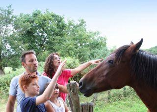 stadnina, konie, koń, dzieci, rodzina