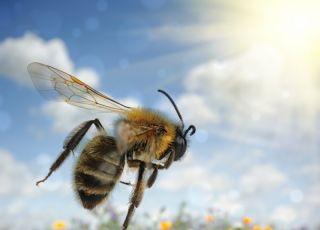 uczulenie, na, jad, owady, dziecko, alergia
