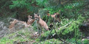 Park Dzikich Zwierząt Kadzidłowo