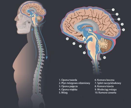 wodogłowie plyn mózgowo-rdzeniowy