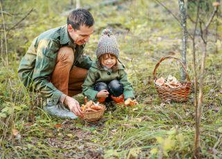 Zbieranie grzybów z dziekciem