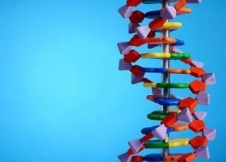 Zespół Downa jest wynikiem obecności diodatkowego materiały genetycznego zawartego w chromosomie 21
