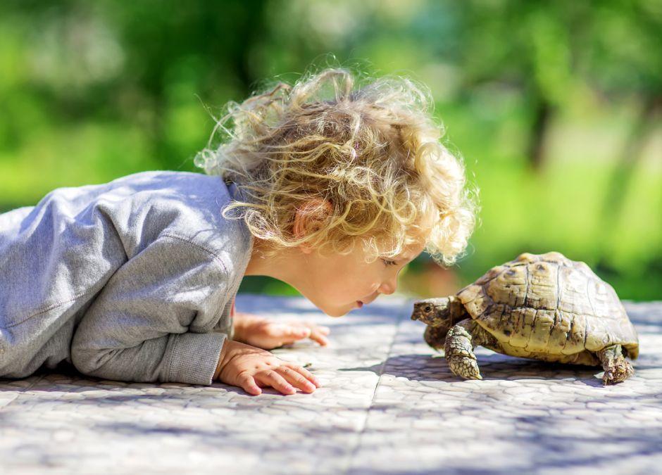 żółw domowy