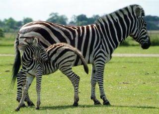 Zoo Safari Park rozrywki w Świerkocinie