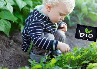 Czy warto kupować ekologiczne jedzenie dla dziecka?