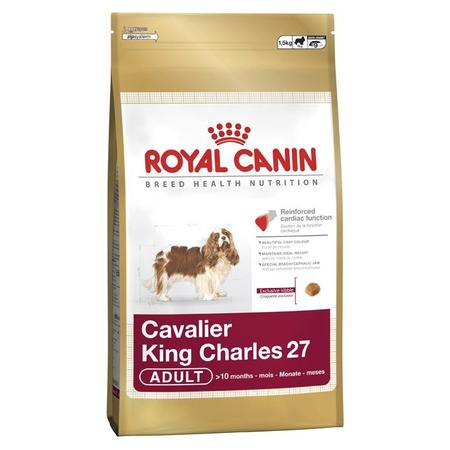 Cavalier King Charles marki Royal Canin - zdjęcie nr 1 - Bangla