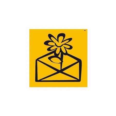 Bangla - Zdjęcie nr 1 sklepu Poczta Kwiatowa - Kwiaciarnia internetowa